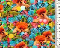 Pomeranianikutsikad värvilisel, Single Jersey