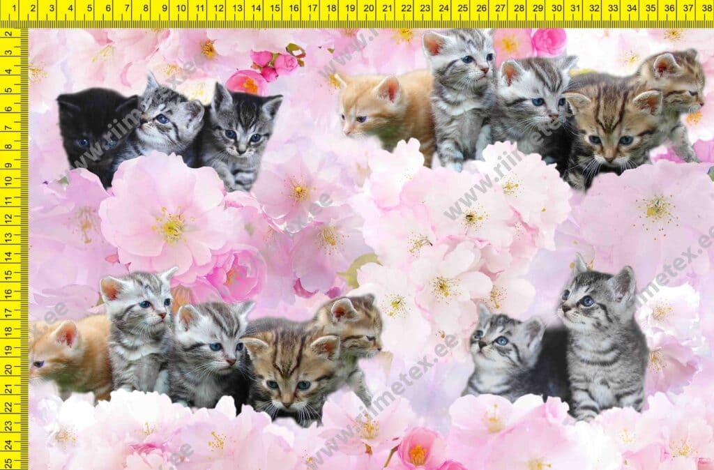Õhuke veekindel jopekangas (soft-mesh), kassipojad