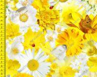 Õhuke veekindel jopekangas (soft-mesh), kollased lilled