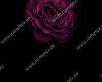 Suur roosiõis, paneel, õhem trikotaaž /Single Jersey/