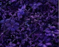 Bambusviskoosist trikotaaž, lillad lilled, Single Jersey