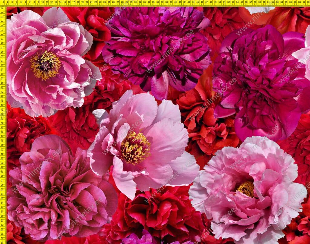 Punased ja roosad suured pojengid, õhem trikotaaž /Single Jersey/